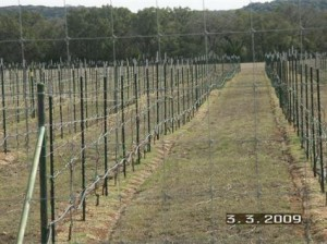 Driftwood vineyard