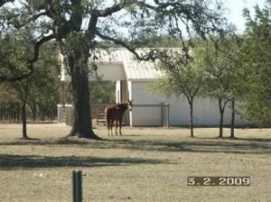 Horse friendly